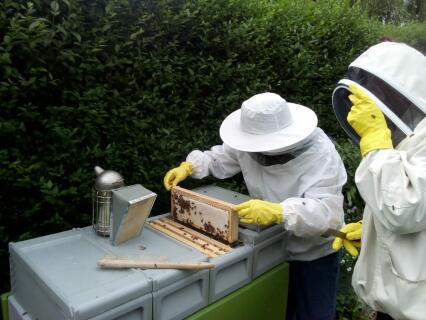Our bees have done us proud!
