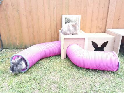 Loving their new tunnels!