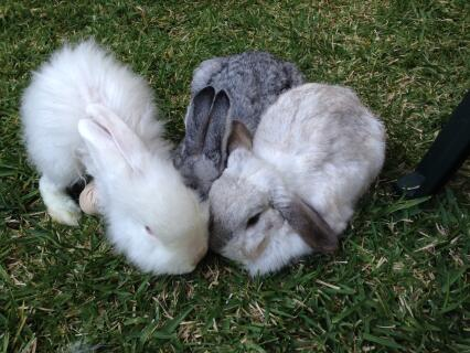 My three Buns.