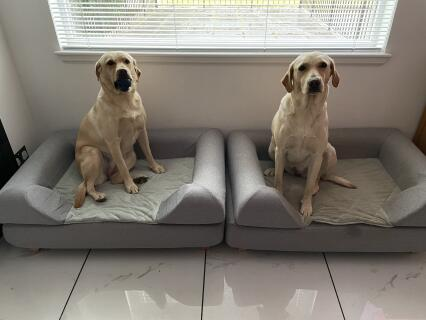 Tilly and Skye enjoying their new beds!