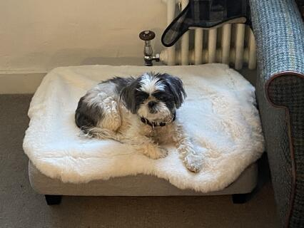 Masie in Daisy's new bed