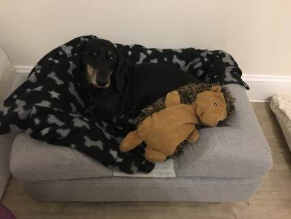 Chester loving his new bed with his favourite buddy, Hedgy