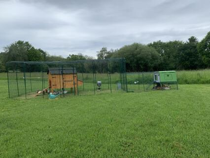 The chickens love the space of their new run.