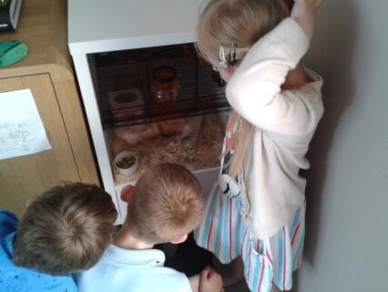 The kids watching our gerbils in the Qute