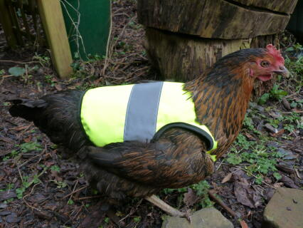 Tegan is a dedicated follower of fashion. the HI Viz jackets are just practical, they look great too