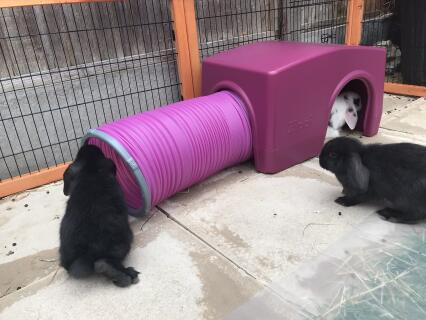 The babies love their new toy.