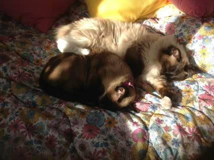 Mia asleep cuddled up to her best friend Jasmin who is 17 years old.