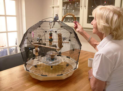 The wonderful Geo budgie cage