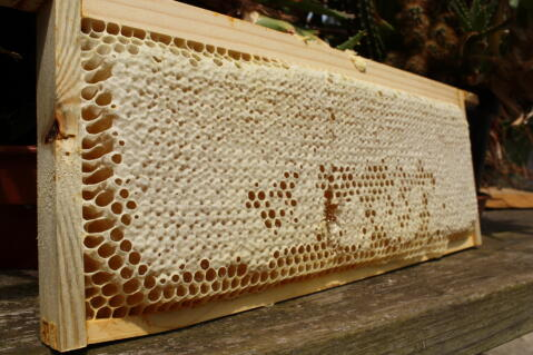 A  section of capped honey