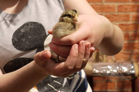 mother hen (my daughter) with her chick