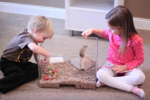 Bean and Tink playing with their gerbils