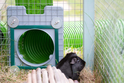 The door frame and door kit from the inside of the cage - the green mesh protectors do a great job of keeping the guinea pigs safe going back and forth
