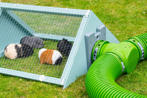 The guinea pigs access their new extension run thanks to their Omlet Zippi tunnels and new T - Sections