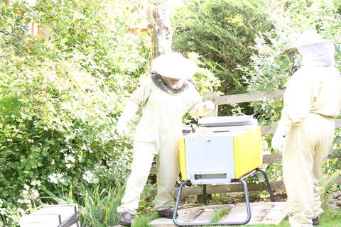 Loading bees in for first time