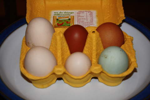 6 beautiful eggs
