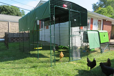The walk-in run is a perfect addition to the Eglu Cube and works great in small yards