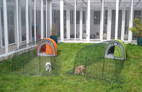 The Rabbit boarding Eglus as Riverside Cat Hotel