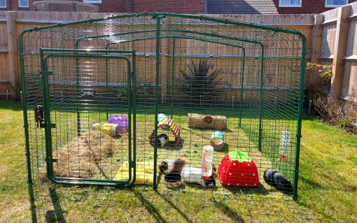 My four Guinea girls absolute love their Omlet Eglu outdoor run. It is the perfect safe place for them to graze and play. I also love the fact that my daughter can sit inside and I can clean easily and access with ease.