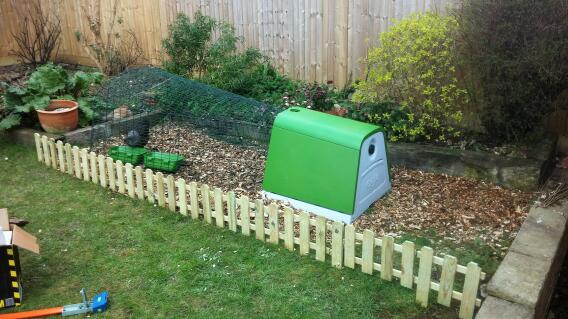 Coop Installation, complete with happy chicken