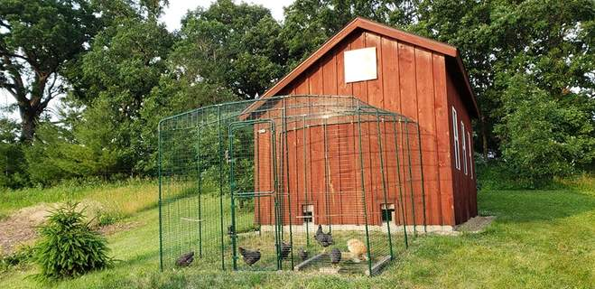 Large run attached to existing hen house in Wisconsin