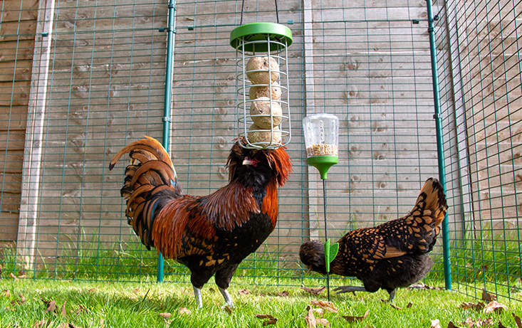 Caddi is the perfect compliment to the Poppy and Pendant Peck Toys for all your chicken treat feeding needs.