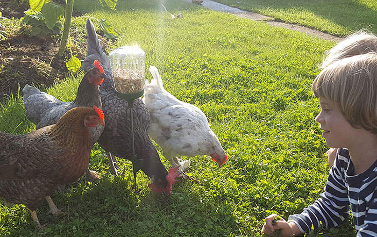 The Poppy Peck Toy lets you spend time with your chickens whilst they find their treats