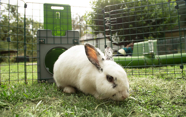 The Zippi rabbit tunnels can be used to give your rabbits access to fresh grass everyday!
