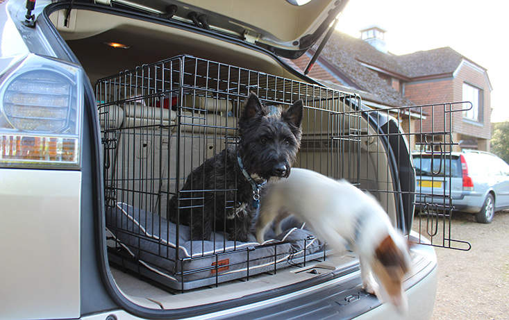 Omlet Fido Classic is a home from home for your dogs in the back of your car.