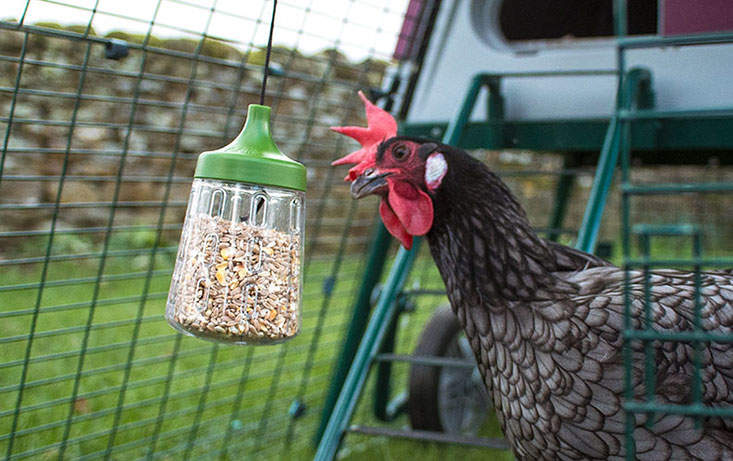 The Pendant Peck Toy will add interest to your chickens' run