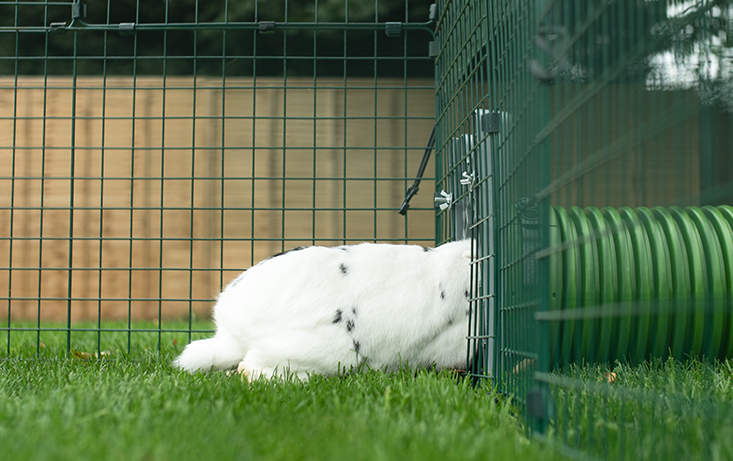 You can connect the Zippi Tunnel securely to any kind of rabbit run or enclosure using the Zippi door frame and connector