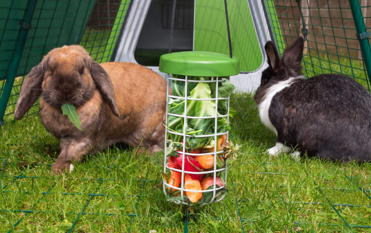 The Caddi provides a clean and hygienic way for you to feed your pet rabbits as it keeps their food off of the ground