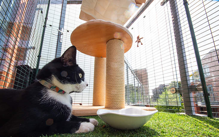 You can furnish your cat proof balcony with scratching posts and interactive cat toys