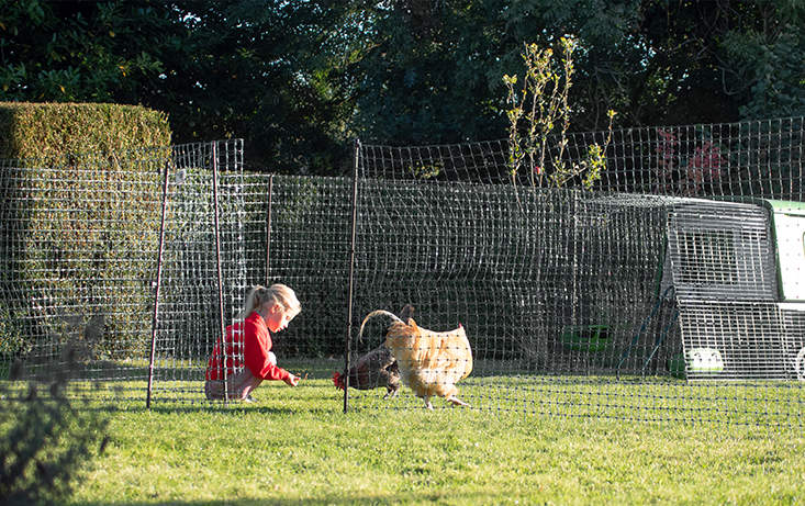The redesigned adjustable gate of the chicken fencing is stronger and more comfortable to use