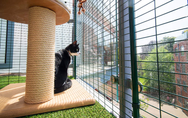 Your cat will love exploring their new secure space on the balcony
