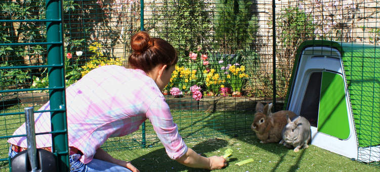 There's plenty of space in the Outdoor Rabbit Run for you to go inside and interact with your pets.