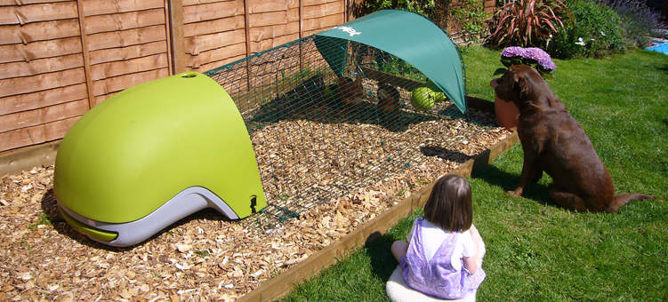 Green Eglu Classic with run on bark chippings - children and pets will enjoy their new company
