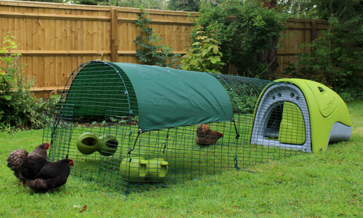 Chickens will love roaming in the Eglu Classic