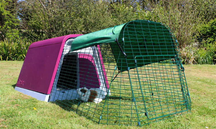 The Eglu Go Guinea Pig Hutch in purple
