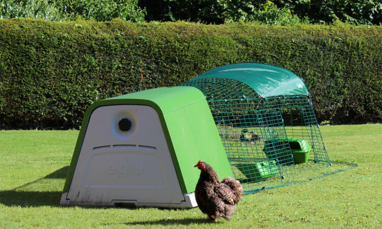 The Eglu Go Chicken Coop is the perfect home for 2-3 hens