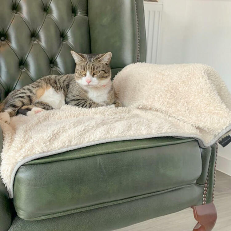 Cats will love to relax on this Luxury Super Soft Blanket for a long afternoon snooze.