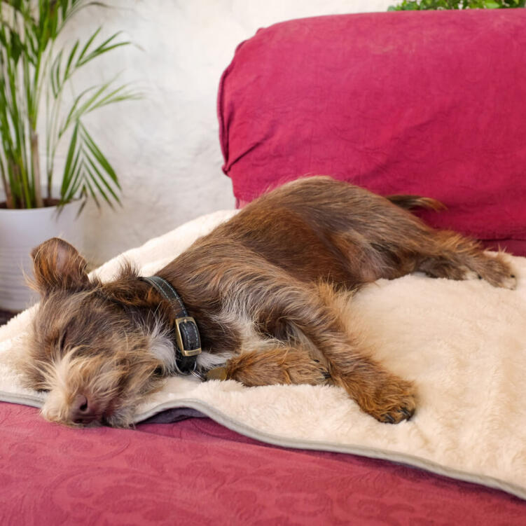Use the dog blanket on sofas, beds or car seats to protect furniture from pet hair and dirty paws.