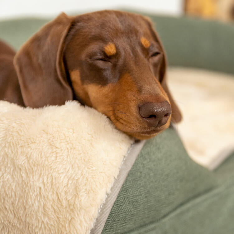 The deluxe cream sherpa is super soft for your dog to snuggle into at bedtime.