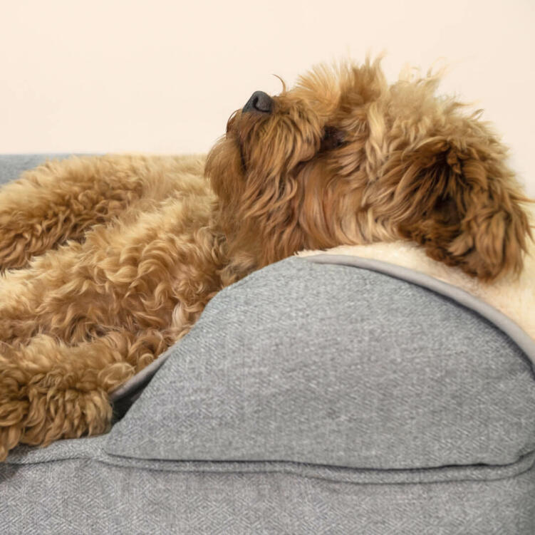 Upgrade your dog's bed with a warm, super soft blanket they will love.
