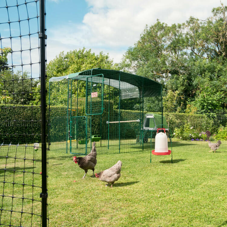 Use Omlet's Chicken Fencing when you want to let your chickens out of their Walk In Run.