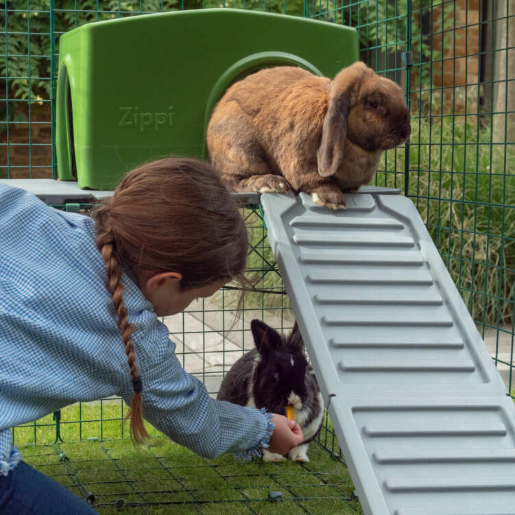 Shy rabbits will love the sheltered spot below the platforms where they can enjoy a nap or a tasty treat!