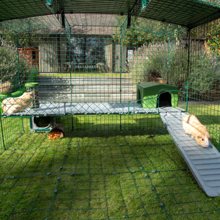 Increase the usable space in your enclosed Zippi Run with exciting levels for pets to explore.