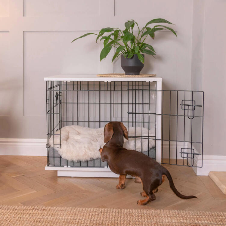 Topology fits perfectly with Omlet's amazing Fido dog furniture range, like the Fido Studio Dog Crate.