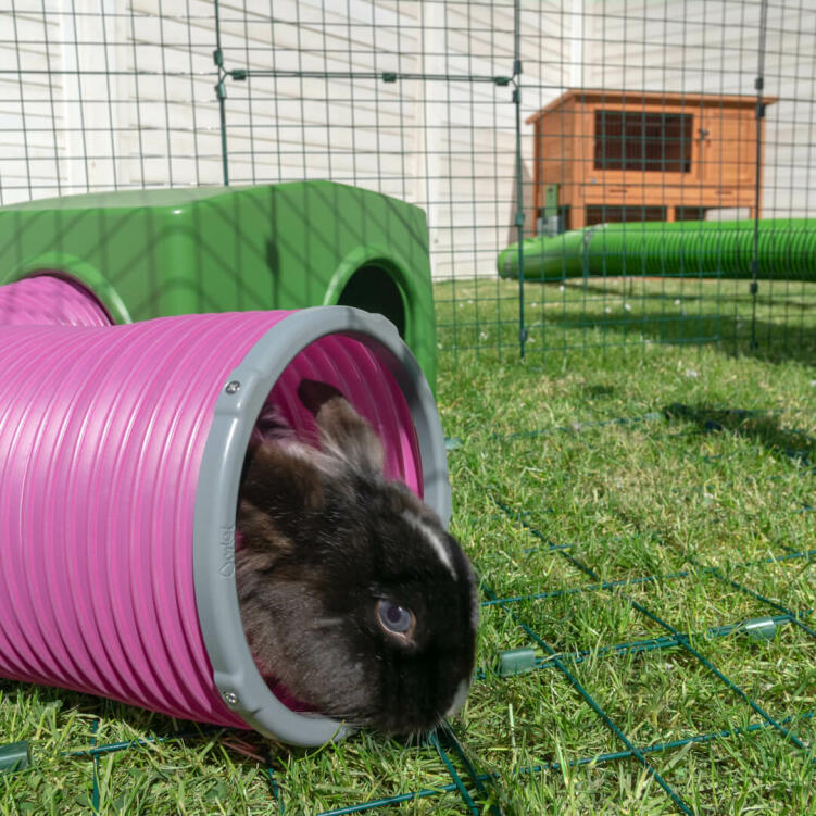 Accessorize your rabbit's run with Omlet play tunnels to mimic the natural burrows rabbits enjoy in the wild.