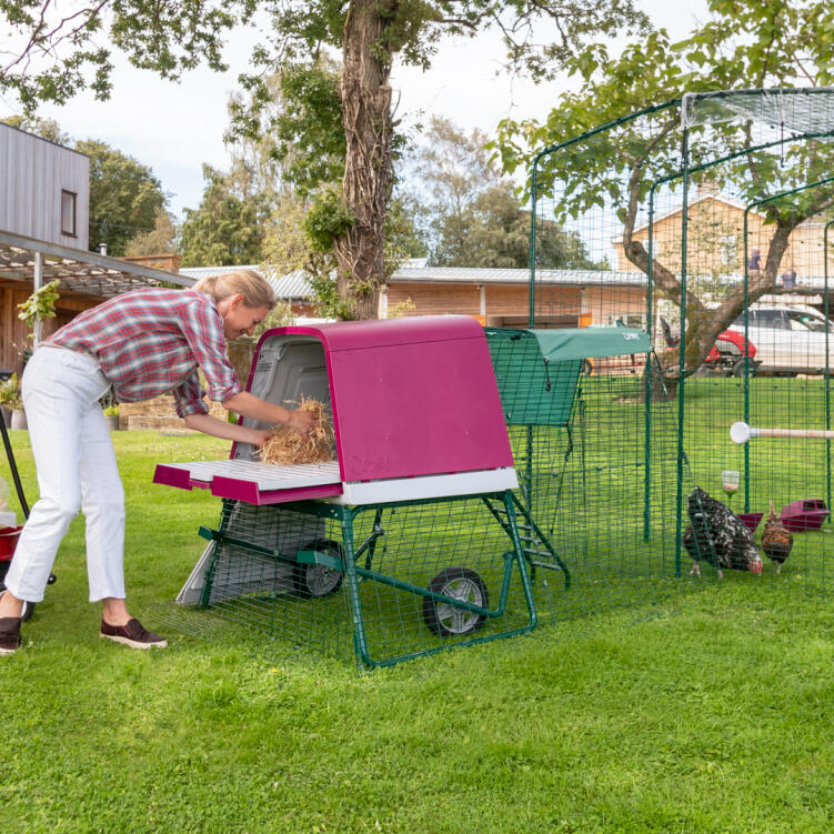 The raised height of the Eglu Go UP chicken coop is really practical, and your hens will love roosting up off the ground.