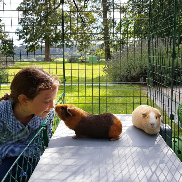 Both children and guinea pigs will appreciate the opportunity to play and interact more closely than ever before.